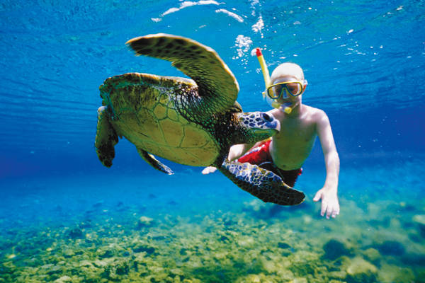 snorkeling with turtles at Capt Ricks Sportfishing, Puerto Aventuras Mexico