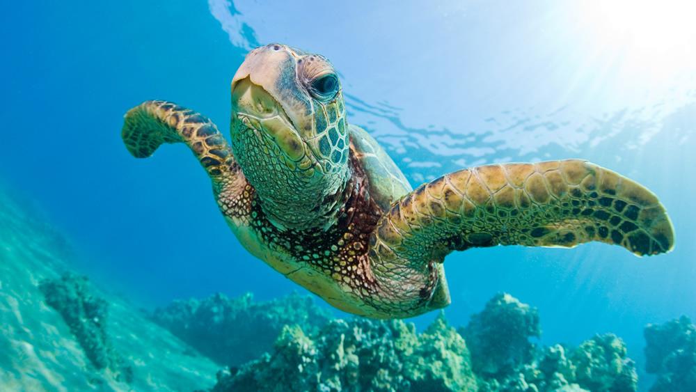 turtle5.jpg